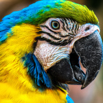 Of Constipated Parrots and Brain MRIs